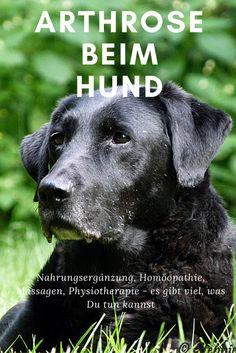 Welche Behandlung beim Hund mit Arthrose ist möglich? | thepellmellpack.com