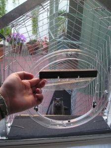 Cat Enclosures and Cat Fences - With Photos and Instructions | Interesting Stuff