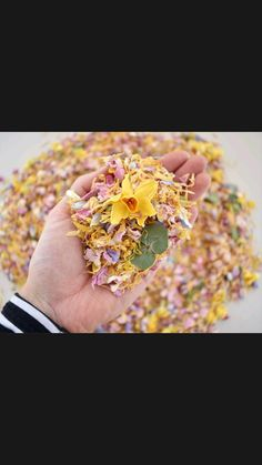 Biodegradable Confetti, Biodegradable Products, Wedding Confetti, Wedding Favors, Wedding Flowers, Wedding Photos, Wedding Photography, Wedding Keepsakes, Marriage Pictures