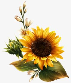 hand painted sunflower, Sunflower, Gold, Flowers PNG Image and Clipart Sunflower Drawing, Sunflower Art, Sunflower Tattoos, Yellow Sunflower, Sunflower Clipart, Sunflower Seeds, Sunflower Paintings, Sunflower Design, Yellow Flowers