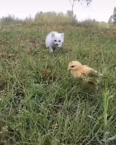 Funny Animal Videos, Funny Animal Pictures, Cute Funny Animals, Cute Baby Animals, Animals And Pets, Cute Cats, Funny Cats, Wild Animals, Tiny Kitten