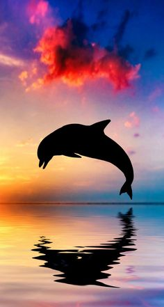 Beautiful Ocean And Sunset With Dolphin Jumping Photograph by . Sunset Wallpaper, Tumblr Wallpaper, Hd Wallpaper, Wallpaper Pictures, Beautiful Creatures, Animals Beautiful, Dolphin Art, Water Animals, Wale