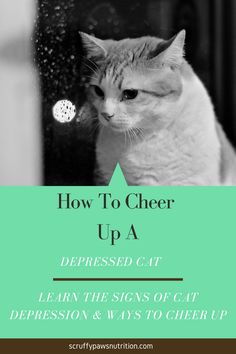 Is Your Cat Depressed? Sometimes though, the depression comes from a very real and painful place. you can help your cat cheer up with various techniques. See how to cheer up a depressed cat here. Also learn the signs of cat depression and causes of feline depression so you can help your cat feel good. Cool Cat Toys, Cool Cats, Cat Health, Health Tips, Baby Cats, Cats And Kittens, Cat Diet, Cat Care Tips, Silly Cats
