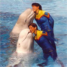 A rede americana de parques aquáticos Sea World, famosa pelas exibições de baleias e golfinhos, tem diversas vagas de emprego abertas nos Estados Unidos. As oportunidades são para atuação em período integral ou meio período, mas há também vagas temporárias.