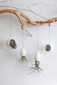 All the cool air plants are hanging out on tree branches these days