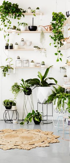 How to Decorate with Natural Elements: Texture, Plants & Organic Materials