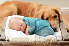 Baby and pet dog photography