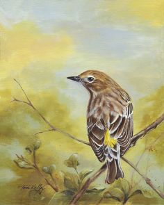 Vigilant by Toni Kelly Backyard Birds, I Shop, Bird Paintings, Watercolor, Fine Art, Canvas, Feather, Paintings Of Birds, Pen And Wash