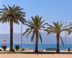 palms on the seaside of tivat montenegro