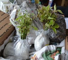 How to Ship Plants by U.S. Mail, UPS or Fed Ex.