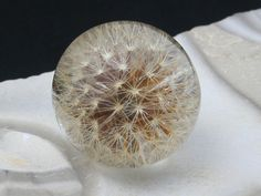 Ginger Hieracium  dandelion pendant by ResinSun on Etsy