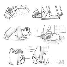 Imágenes que ilustran perfectamente como es vivir con un perro