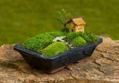Mini jardincito zen... no este invierno me hago uno con la maceta del bonsai fallecido.... no hay mal q por bien no venga...