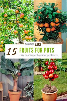 15 Container Gardening Fruit With Incredible Flavor You don& need a big gar. - 15 Container Gardening Fruit With Incredible Flavor You don& need a big garden to grow fruits - Backyard Vegetable Gardens, Container Gardening Vegetables, Fruit Garden, Container Plants, Planting Vegetables, Edible Garden, Easiest Vegetables To Grow, Plants In Pots, Backyard Garden Ideas