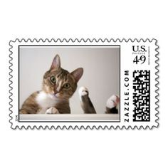 =>quality product          	Kitty Stamps For The Cat Loving Person           	Kitty Stamps For The Cat Loving Person online after you search a lot for where to buyShopping          	Kitty Stamps For The Cat Loving Person Online Secure Check out Quick and Easy...Cleck Hot Deals >>> http://www.zazzle.com/kitty_stamps_for_the_cat_loving_person-172759383686608403?rf=238627982471231924&zbar=1&tc=terrest