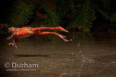 Freeze Time With High Speed Photography