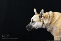 Charlie by aldeluca1 #animals #animal #pet #pets #animales #animallovers #photooftheday #amazing #picoftheday