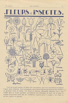 Discover recipes, home ideas, style inspiration and other ideas to try. Motifs Art Nouveau, Design Art Nouveau, Motif Art Deco, Art Nouveau Pattern, Illustration Art Nouveau, Botanical Illustration, Sgraffito, Cartoon Drawings, Art Drawings