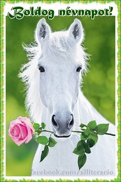 White Horse (Holding Pink Rose) Art Poster Print Posters - by AllPosters. All The Pretty Horses, Beautiful Horses, Animals Beautiful, Cute Horses, Horse Love, Animals And Pets, Cute Animals, Nature Animals, Horse Posters