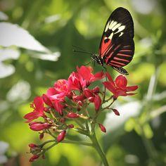 Piano Key Butterfly on flower