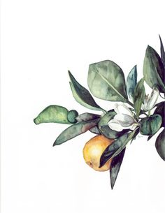 Orange Blossom - Art Print