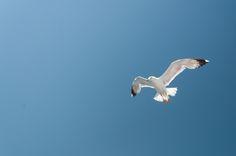 Clear blue sky by Fabi Nuka on 500px Clear Blue Sky, Bird, Birds