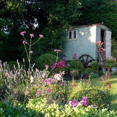 Evening sunshine. #cottagegarden #countrygarden #shepherdshut #verbena