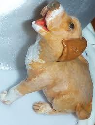 Resultado de imagem para cachorrinhos em biscuit