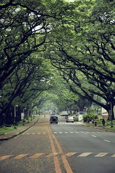 University of the Philippines Going To University, University Life, Philippines Wallpaper, Top Travel Websites, Dream School, Quezon City, Girl Photography Poses, Philippines Travel, Phone Backgrounds