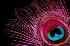 Pink Feathers!!!  LOVE!