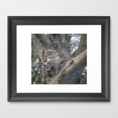 Woodpecker 2 by Sarah Shanely Photography $34.00