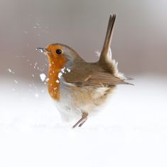 Cameras at the ready! Are you 2015's best wildlife photographer?
