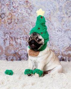 Christmas puggy
