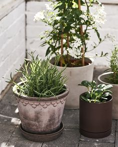 Flower Pots, Flowers, Tuscany, Greenery, Roots, Planter Pots, Canning, Plants, Inspiration
