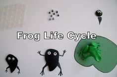 Life Cycle of a Frog that you can make. Love the googly eyes for frog eggs. So creative!