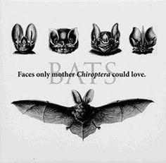 Faces only mother Chiroptera chould love