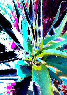 Aloe Shadows 6 Art Print by Rheta-Mari Kotze. All prints are professionally printed, packaged, and shipped within 3 - 4 business days. Thing 1, Pillow Sale, Abstract Flowers, All Print, Textile Art, Aloe, Fine Art America, Art Projects, Fine Art Prints