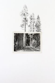 Drawing with Vintage Photo - Highway Through the Giant Redwoods. $350 on etsy
