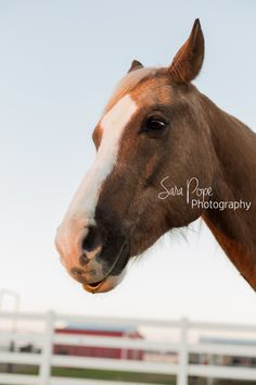 Sara Pope Photography / natural light / Brentwood CA / Oakley / Bay Area Photographer / East County / the golden hour / horse / stables / barn / country / photography / animals / animal