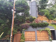 Beautiful Berkeley — Great landscaping on terraced yard.
