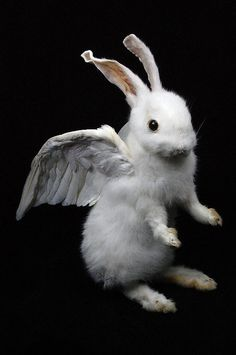 taxidermy of rabbit named angel made by Real rabbit by lovefuture, $120.00