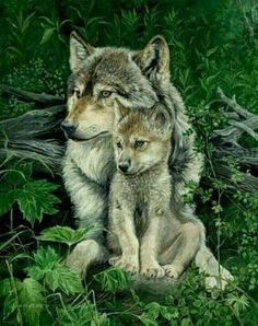 Beautiful Wolf and pup