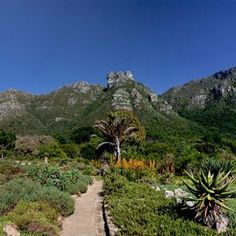 City Pass gives you access to the top attractions in Cape Town, boasting more things to do than any other city pass offering. See our attractions online! National Botanical Gardens, City Pass, Table Mountain, Garden S, Days Out, World Heritage Sites, Aerial View, Hiking Trails, Cape Town