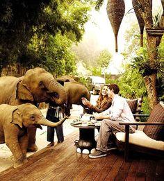 象好きにはたまらない!