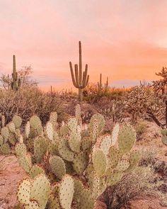 ARNHEM on Lost amongst the desert sunsets Giving us some cactus garden inspo. - ARNHEM on Lost amongst the desert sunsets Giving us some cactus garden inspo… Gorgeous capture vi - Desert Dream, Desert Sunset, Desert Art, Sunset Beach, Desert Aesthetic, Travel Aesthetic, Boho Aesthetic, Western Photography, Nature Photography