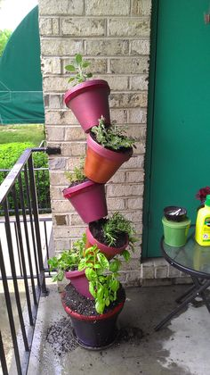 my topsy turvy herb garden on my apartments balcony!