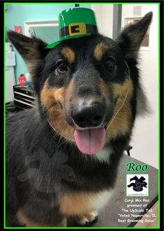 15 best st patricks day pet grooming at the upscale tail all breed and rare breed grooming at the upscale tail voted naperville il pet solutioingenieria Image collections