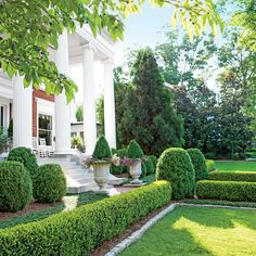The Plants - Rome is Where the Heart Is - Southern Living