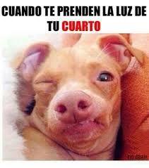 Resultado de imagen de memes gif de animales graciosas