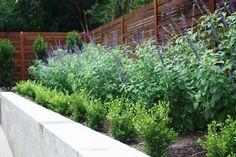 Minimalist Backyard modern landscape